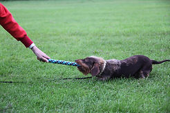 Priveles hond Hondenschool 'Het Klikt'