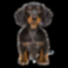 dog (2).png