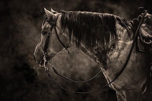 """16"""" x 20"""" RANCH HORSE PORTRAIT"""