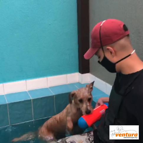 Biscoito Totó perdeu o medo de nadar!!