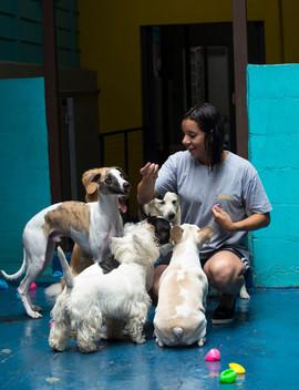 Day care / Hotel para cães e gatos