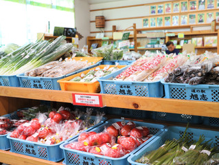 旭志の夏野菜