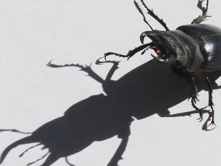 旭志の昆虫