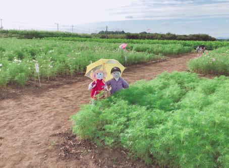 コスモス情報 2019