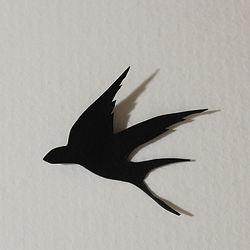 IMG_2984-swallowtest.jpg