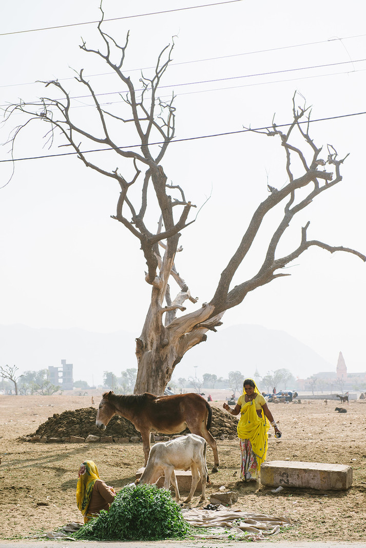 11-#india