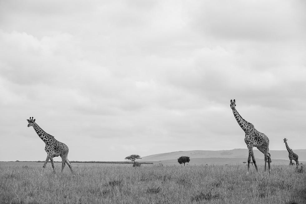 31-#kenya