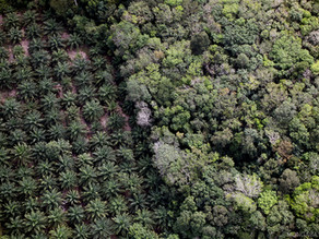 In-Depth: Palm Oil: Are We Unknowingly Feeding Our Children an Unethical Oil?
