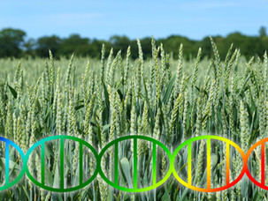 Genome-Edited Foods: Are they Coming to our Supermarkets Soon?