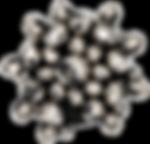 DSC02964-1-transparent.png