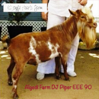 Algedi Farm DJ Piper