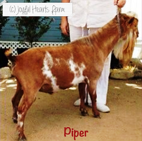 Algedi Farms DJ Piper