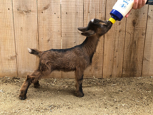 L20 doe, bottle baby