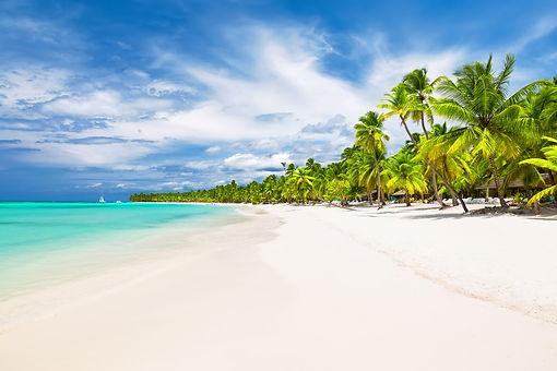 Palm Trees on Shore.jpg