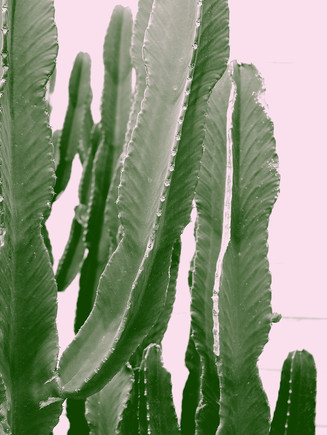 abstract-botanical-cactus-cactus-plant-9