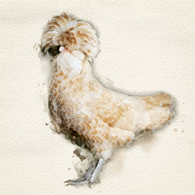 The Magnificent hen lr.jpg