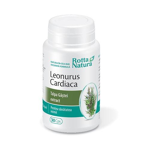 Leonorus cardiaca Talpa gastei extract
