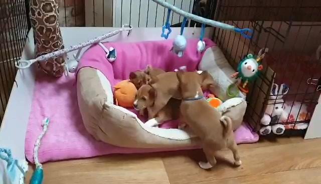 Zainabu puppies 2020 video-1610047635.mp