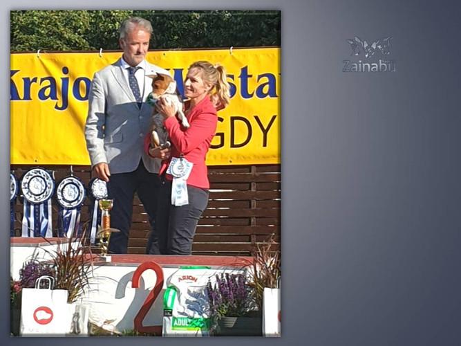 """Basenji Zainabu - """"Happy"""" w Gdyni na Wystawie Psów Rasowych"""