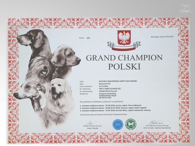 Oficjalnie potwierdzony tytuł Grand Champion Polski dla pierwszej suczki basenji którą jest Happy