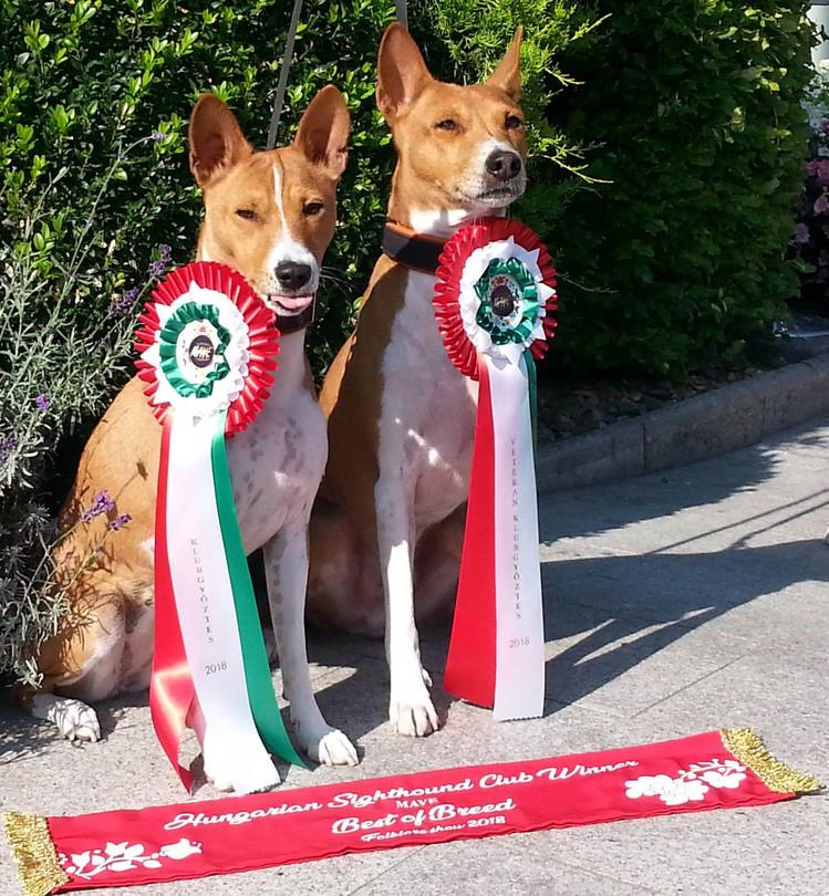 Happy i Benji zwyciązcami Klubowej wystawy na Węgrzech