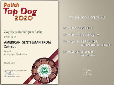basenji zainabu polish top dog 2020_1.jp