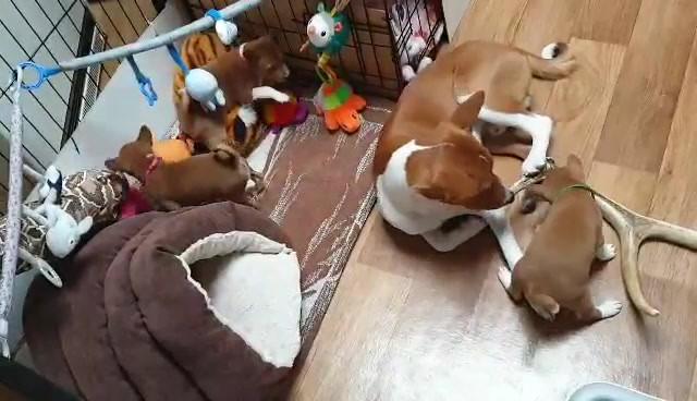 zainabu puppies BE_team 2020 video-16101