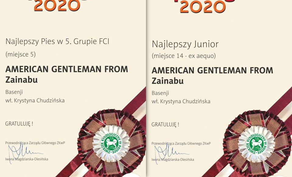 Basenji zainabu polish top dog 2020 American Gentleman from zainabu