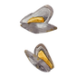 shell fish-8.png