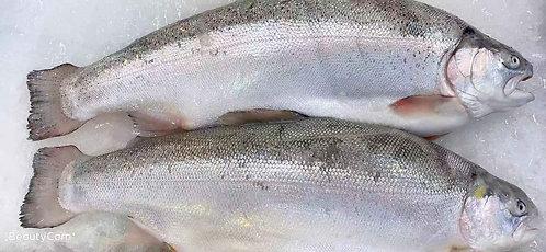 Salmon (Fresh)