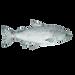 fish 2-8.png