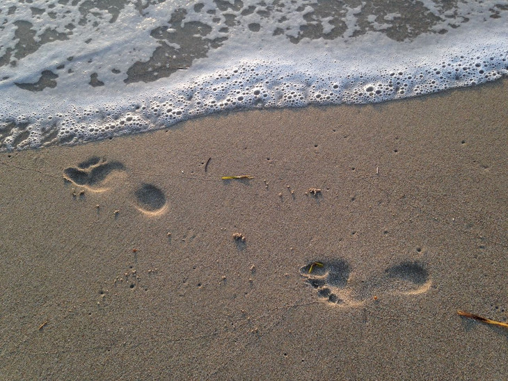 Footsteps Into The Future