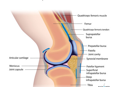 What is your knee pain?
