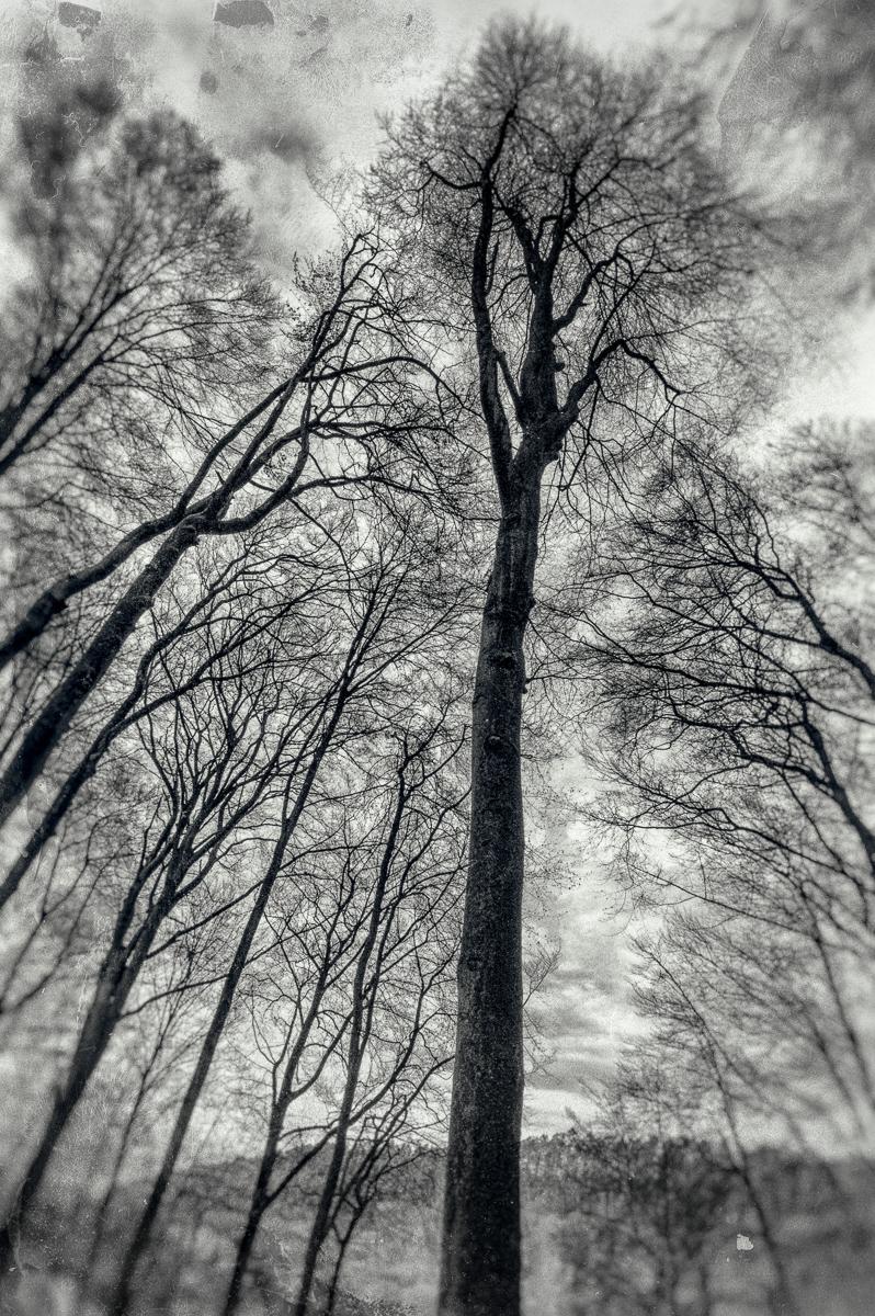Jil Linden-1.jpg