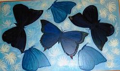 Ann's award-winning butterfly painting.j