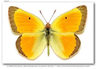 Emil's Butterfly.jpg