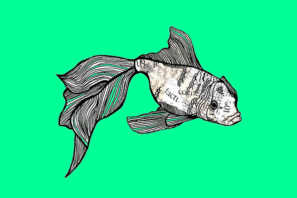 Recycled Fish
