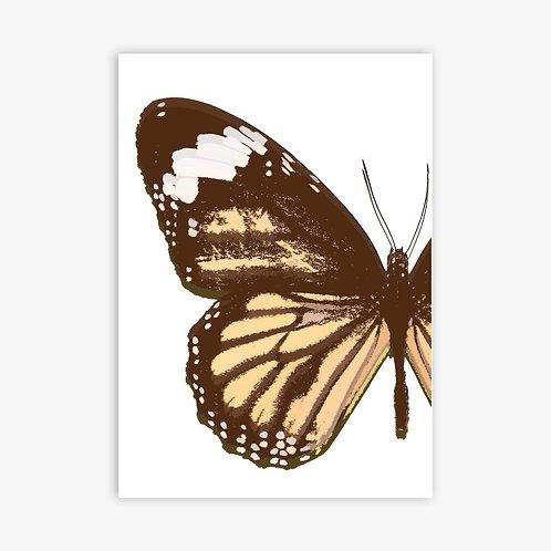 Flutter 2 - Orange