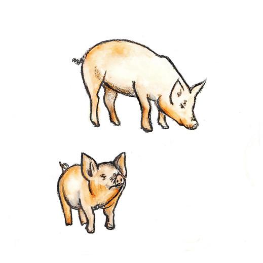 Pigs Original Illustration