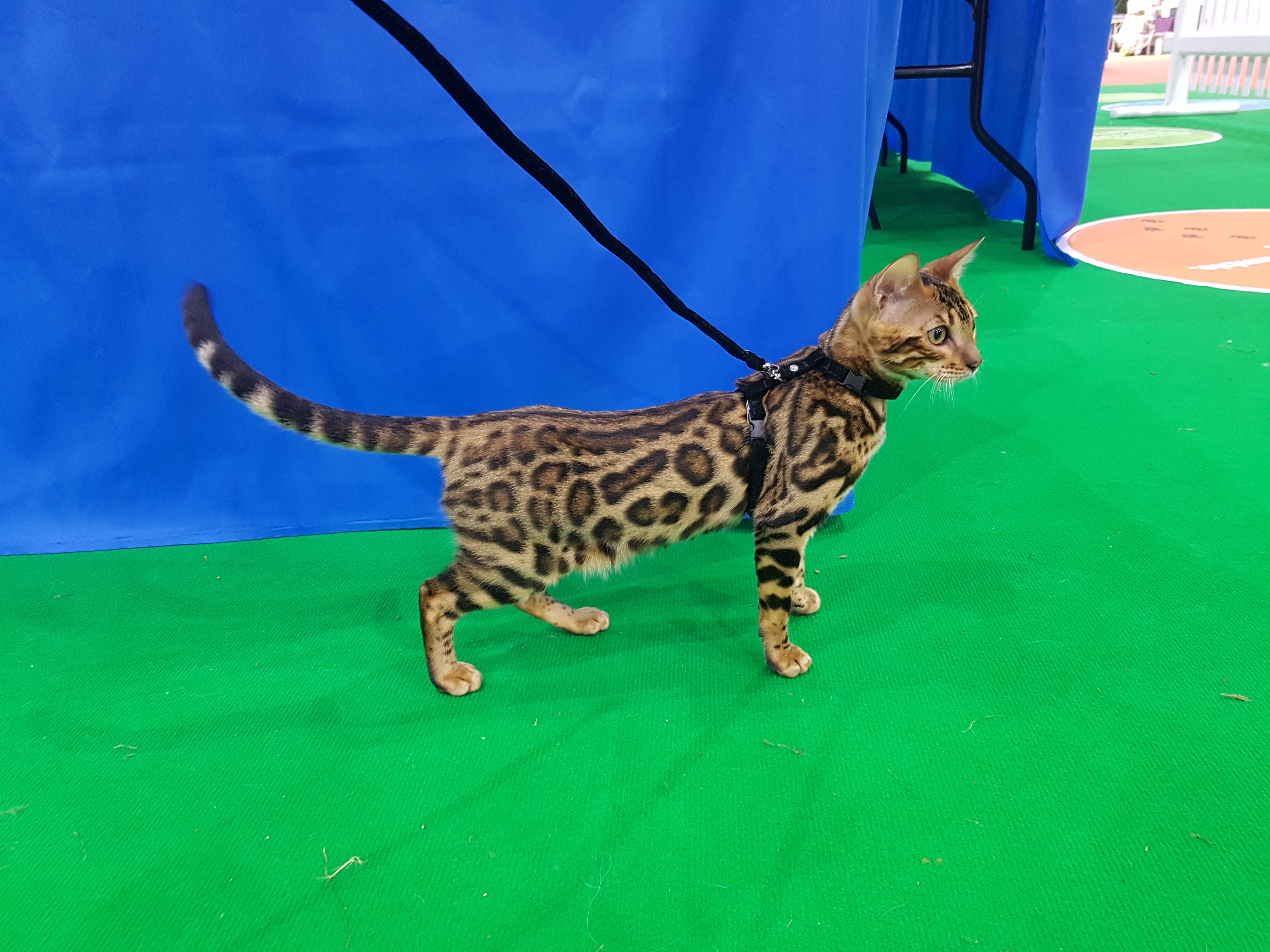 Siena - Pet Show 2017