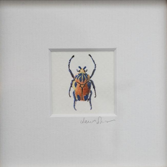 wall bug 6