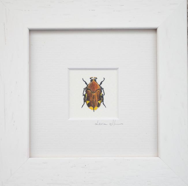Wall bug 2