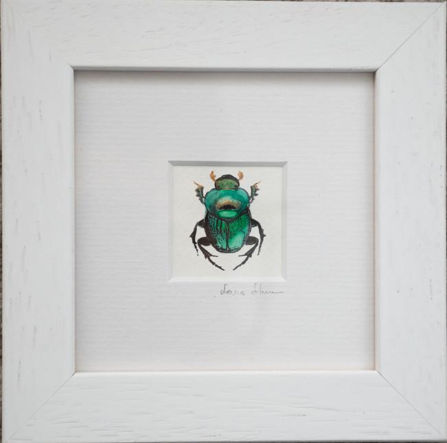 Wall bug 1