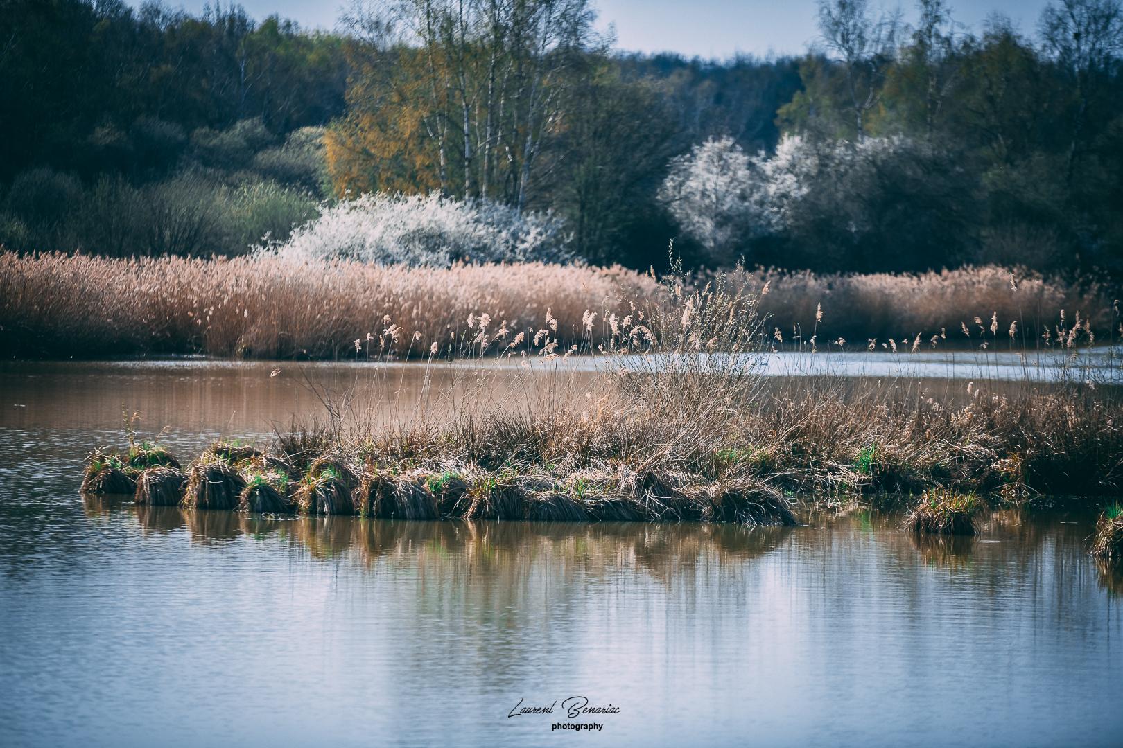 étang de Corbet yvelines