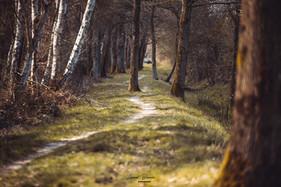 forêt yvelines