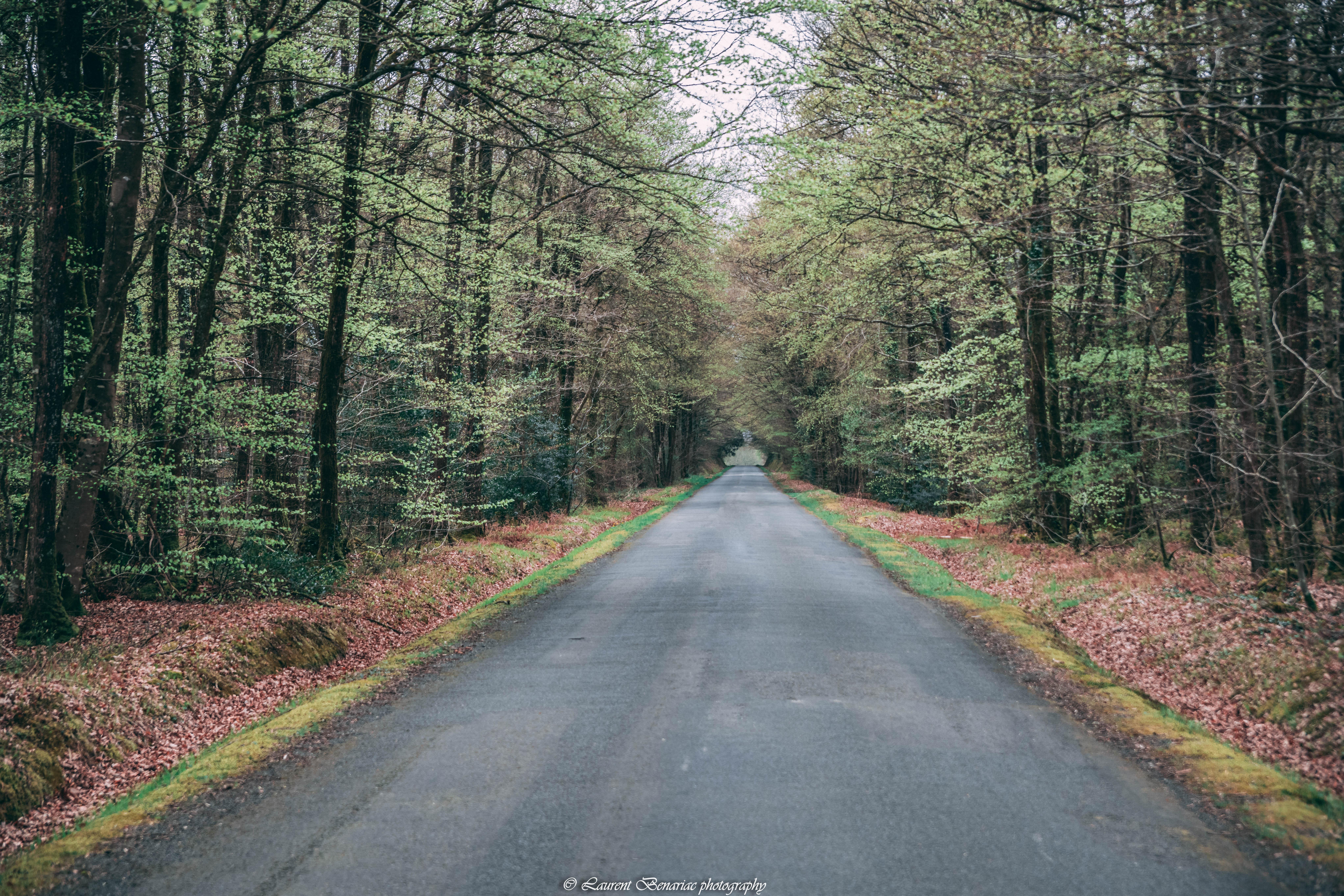 forêt de de Broceliande