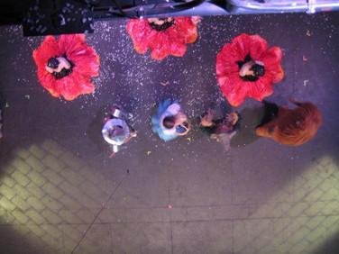 Poppies will make them sleep.  Poppy dance costumes looked like poppies.