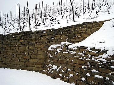 Viticoltura attenta, viticoltura sostenibile, passione e ragione, sostenibile,