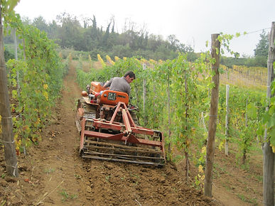 sustainable; vine; wine