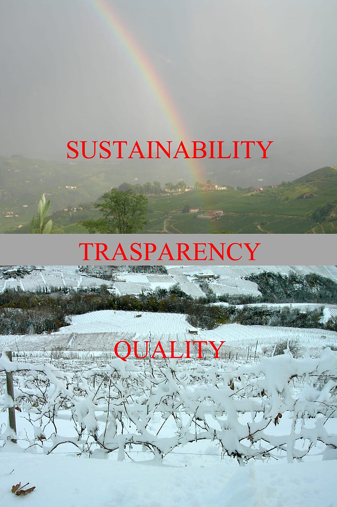 sustainable; vine; wine; landscape